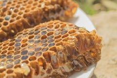 Panal de Brown con la miel en la placa blanca Imagen de archivo libre de regalías