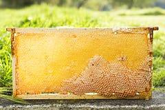 Panal de la abeja Foto de archivo libre de regalías