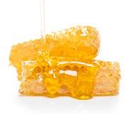 Panal de la abeja con la miel Imagenes de archivo