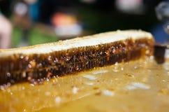 Panal de la abeja con la miel Fotos de archivo libres de regalías