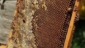 Panal de la apicultura almacen de metraje de vídeo