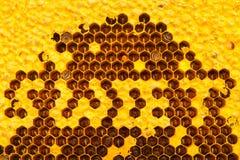Panal de la estructura de las abejas Foto de archivo libre de regalías