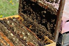 Panal de la miel Fotos de archivo