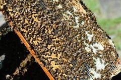 Panal de la miel Foto de archivo