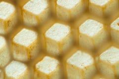 Panal de las abejas fotografía de archivo libre de regalías