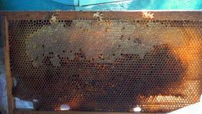 Panal de las abejas con la miel y el perga Fotografía de archivo libre de regalías