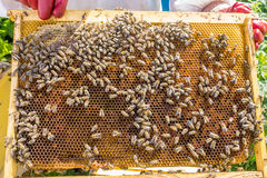 Panal de las abejas con las abejas de la miel, del perga y de la miel Fotos de archivo