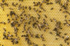 Panal del fondo con la miel a la cual las abejas traen la miel Fotografía de archivo