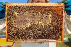 Panal del primer por completo de abejas y de la miel Imagen de archivo
