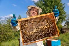Panal del primer por completo de abejas y de la miel Foto de archivo libre de regalías