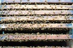 Panal del ser humano hecho en la madera Foto de archivo