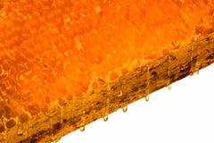 Panal destapado aislado con la miel en un fondo blanco Imagen de archivo
