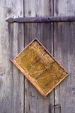 Panal en fondo de madera Imagen de archivo