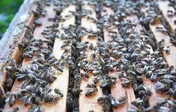 Panal en la colmena con las abejas y la miel Foto de archivo