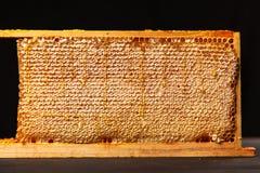 Panal en un marco de madera Foto de archivo libre de regalías