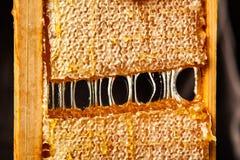 Panal en un marco de madera Imagen de archivo libre de regalías