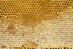 Panal encerado con la miel Imagen de archivo libre de regalías