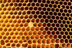 panal hermoso amarillo con la miel Fotos de archivo libres de regalías