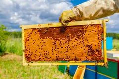 Panal lleno sellado con la miel en el marco de madera, cierre para arriba Imágenes de archivo libres de regalías