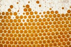 Panal natural por completo de la miel Imagen de archivo