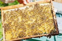 Panal por completo de abejas Fotos de archivo libres de regalías