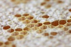 Panal por completo de la miel Imagen de archivo libre de regalías