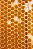 Panal por completo de la miel Imagen de archivo