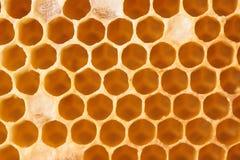 Panal por completo de la miel Fotos de archivo libres de regalías
