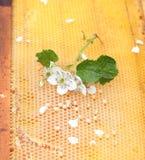 Panal vacío y lleno de miel Foto de archivo libre de regalías