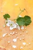 Panal vacío y lleno de miel Imagen de archivo libre de regalías