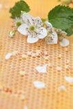 Panal vacío y lleno de miel Foto de archivo