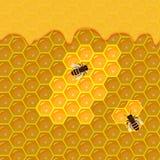 Panal y goteos dulces de la miel Imagen de archivo