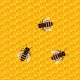 Panal y goteos dulces de la miel productos y apicultura del colmenar Imágenes de archivo libres de regalías
