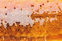 Panales con la miel de la abeja en células Imagen de archivo
