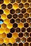 Panales con la miel Fondo natural Fotos de archivo libres de regalías