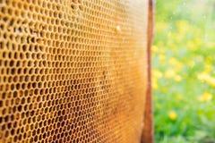 Panales con la miel Fondo natural Fotografía de archivo