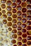 Panales con la miel Fondo natural Fotos de archivo