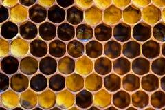 Panales con la miel Fondo natural Foto de archivo