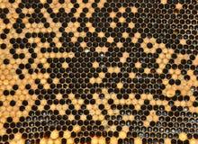 Panales con las células selladas Fotografía de archivo libre de regalías