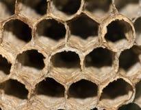 Panales de abejas Macro Imágenes de archivo libres de regalías