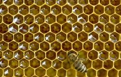 Panales de la abeja Fotografía de archivo