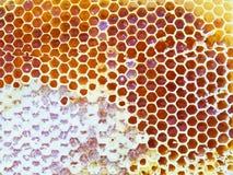 Panales de la abeja Foto de archivo libre de regalías