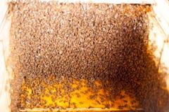 Panales de la abeja de la cera en un marco de madera de una colmena por completo de la miel amarilla sabrosa de mayo Fotografía de archivo