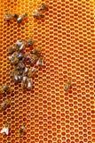 Panales de la abeja con la miel Imagenes de archivo