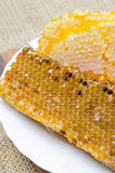 Panales de la abeja con la miel Fotos de archivo libres de regalías