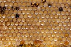 Panales de la abeja con la miel Fotografía de archivo