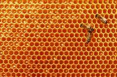 Panales de la abeja con la miel y las abejas Apicultura Imágenes de archivo libres de regalías