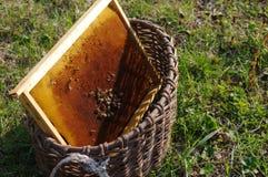 Panales de la abeja con las abejas en una cesta vieja en una hierba Fotos de archivo libres de regalías