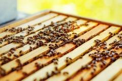 Panales de la abeja con la miel y las abejas Apicultura Fotografía de archivo libre de regalías