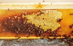 Panales de la abeja con la miel y las abejas Apicultura Foto de archivo